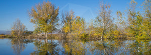 Molonglo River 'Reflections', ACT