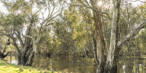 Murrumbidgee River, Darlington Point