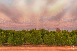 Orchards, Griffith (BJ041R)