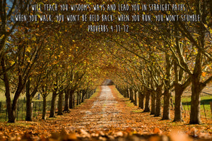 Word + Image: Proverbs 4:11, Autumn Drive Southern Highlands (WI042R)