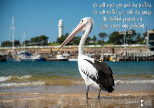 Word + Image: Psalm 91:4 - Wollongong Pelican (WI024R)