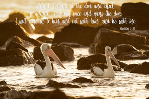 Word + Image: Revelation 3:20, Shellharbour Pelicans (WI045R)
