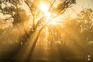 Morning Rays I, Balranald (BJ012R)