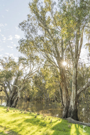 Morning Rays V, Balranald (BJ016VR)