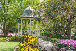 Tulip Time at Bowral, Southern Highlands (AB102R)