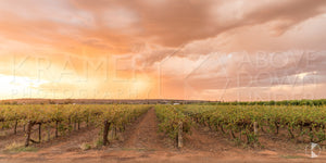 Rose Vineyards, Griffith (BJ001P)