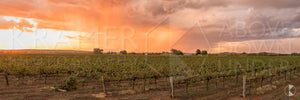 Rose Vineyards II, Griffith (BJ002WP)