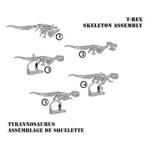 Load image into Gallery viewer, DIG! & DISCOVER™: 3-D Tyrannosaurus Rex Skeleton