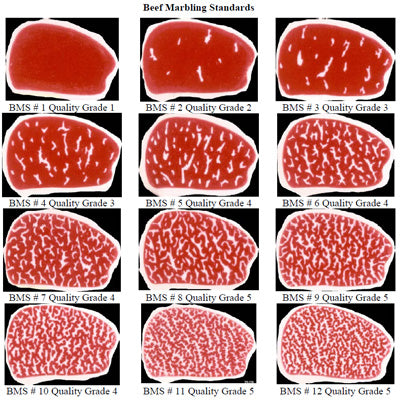Safe & Healthy: Meat Quality – Safe and Healthy: Preserving Food ...