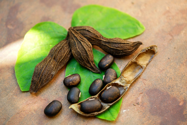 Mucuna Pruriens: The Dopamine Bean