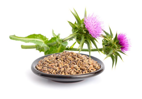 Milk Thistle: A Key Ingredient in our Liver Detox Formula
