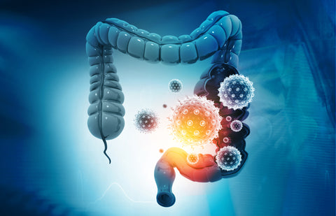 Leaky Gut and the Immune System