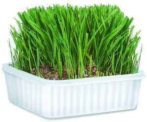 Cat A'Bout Cat Grass Plus Growing Kit 150g