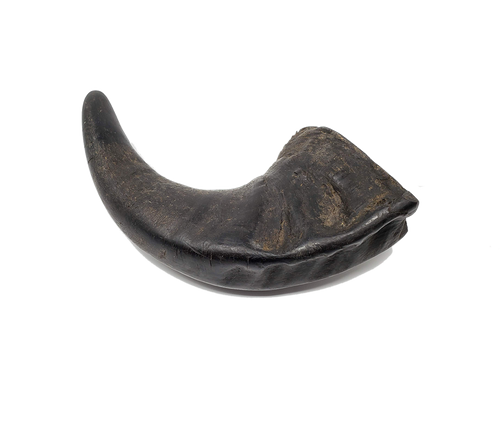 Free Range Buffalo Horn Dog Chew