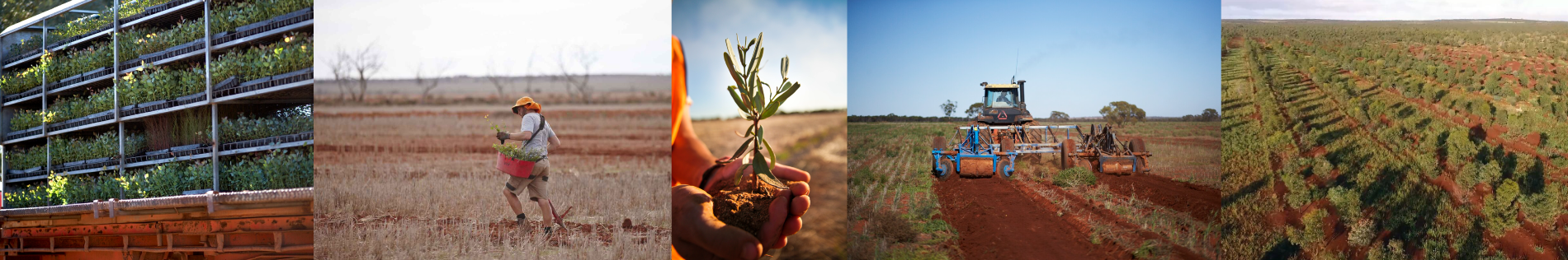 Planting Trees with Carbon Neutral