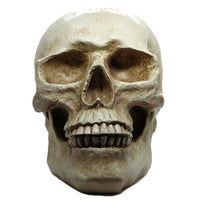 Skull Decor Moneybox