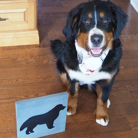 Bernese Puppy with Bernese Sign