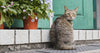 indoor vs outdoor cat - steps for a healthy cat