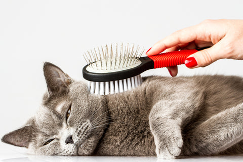 What You Need To Know About Cat Grooming