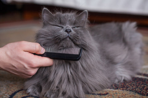 Why Do Cats Need Grooming