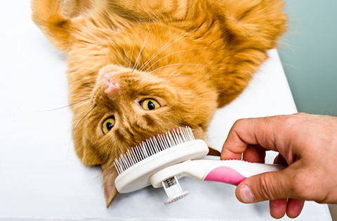 Best Cat Brush - Cat Grooming Tools