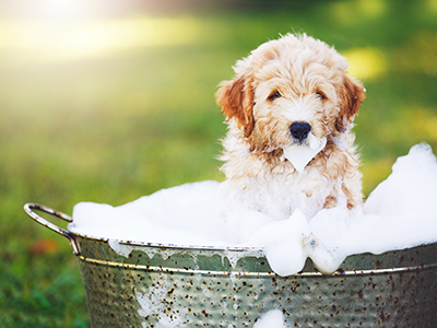 How To Give A Dog A Bath - Grooming Tips