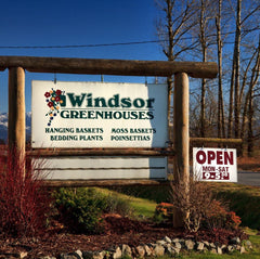 Whimsy's stockist Windsor Greenhouse