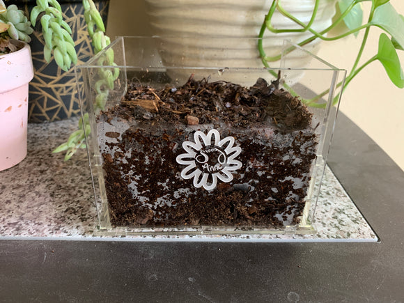 Cute Acrylic Planter - Personalization Available!