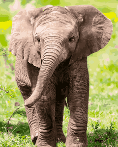 Baby elephant (Painting by Numbers)
