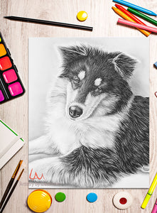 Printable Coloring Page: Collie in Grayscale