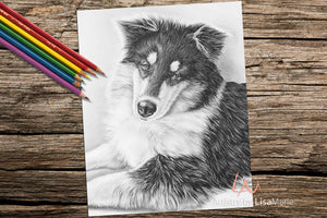 Printable Coloring Page: Collie in Grayscale, , ArtistrybyLisaMarie