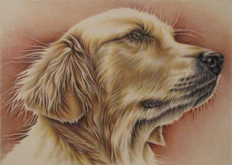 Fine Art Print: Drawing of Golden Retriever, , ArtistrybyLisaMarie