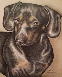 Fine Art Print: Drawing of Dachshund Dog, , ArtistrybyLisaMarie