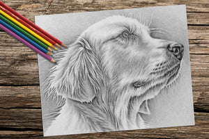 Printable Coloring Page: Golden Retriever in Grayscale, , ArtistrybyLisaMarie