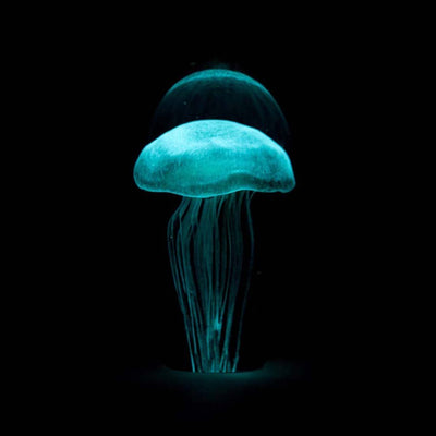 Small Blue Green Jellyfish with Background