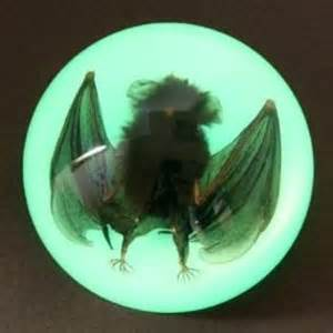 Glow in the Dark Vampire Bat