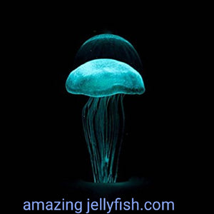 Mini Teal Jellyfish