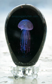 Black Beauty Granite Yellow Jellyfish