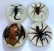 4 pc Spider Scorpion Bat Specimens
