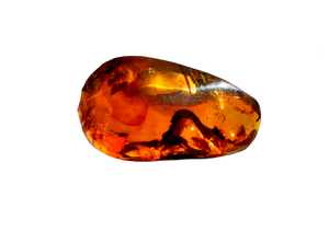 Fossil in Amber - ALS - Gems of Honduras