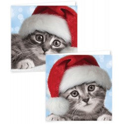 12 Square Photographic Kittens Boxed Cards