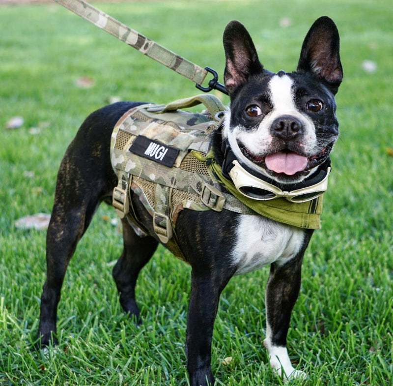 Compact K9 Tactical MOLLE Dog Vest