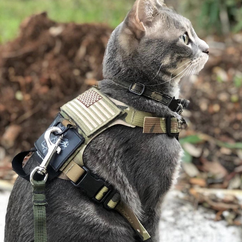 M1 Lightspeed Harness for Cats