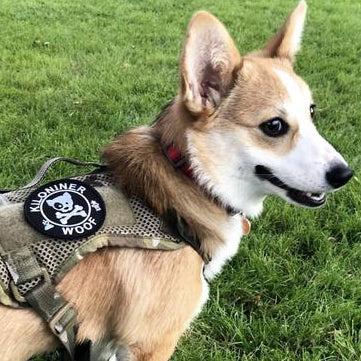 Dog and Crossbones - Morale Patch