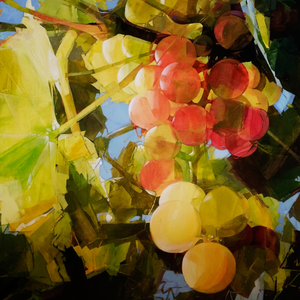 Sunlit Grapes
