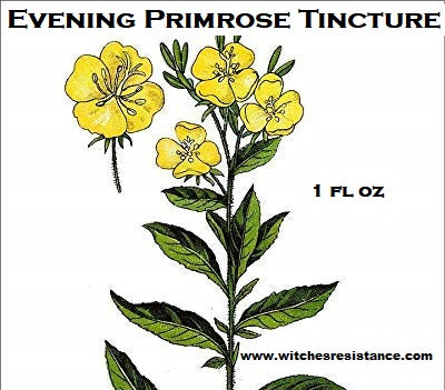 Evening Primrose Tincture (Oenothera biennis)