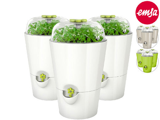 Fresh Herbs Pot with Lid