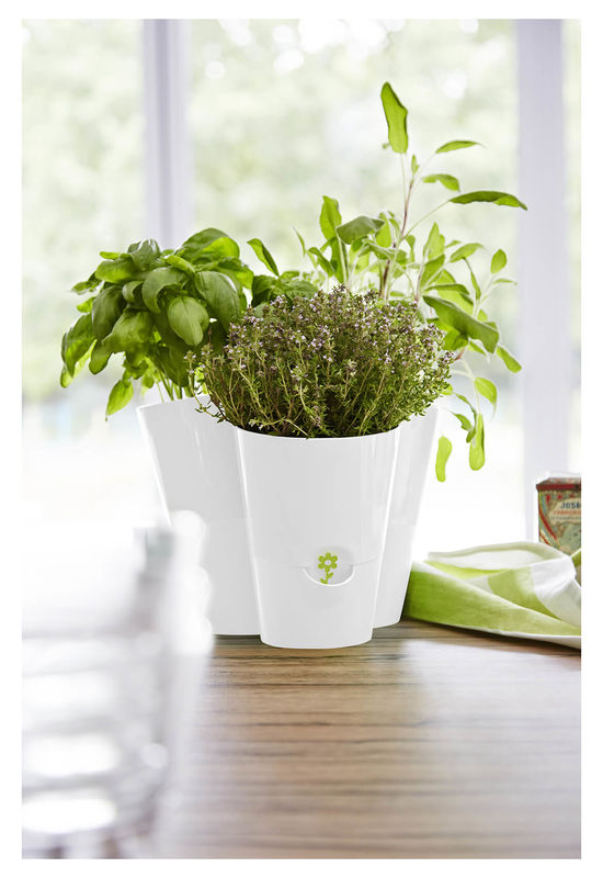 Trio Fresh Herbs Pot
