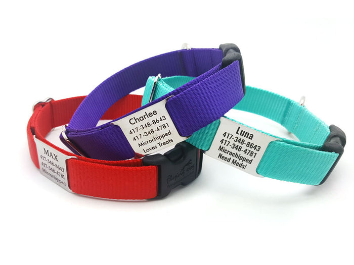 StrapTag Nylon Webbing Collar with Personalized NamePlate