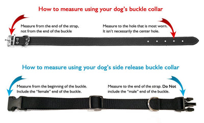 Busy Bees Polyester Webbing Dog Collar with Laser Engraved Personalized Buckle - Flying Dog Collars